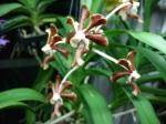 orkidee 7 dec-14 jan 2011 019